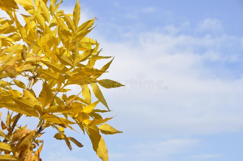 Boom in een park in de herfst met gele bladeren royalty-vrije stock foto
