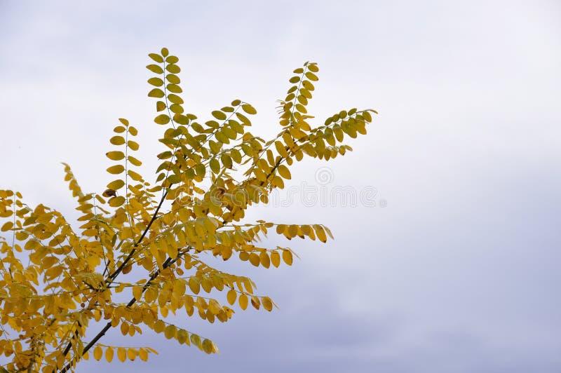 Boom in een park in de herfst met gele bladeren stock foto