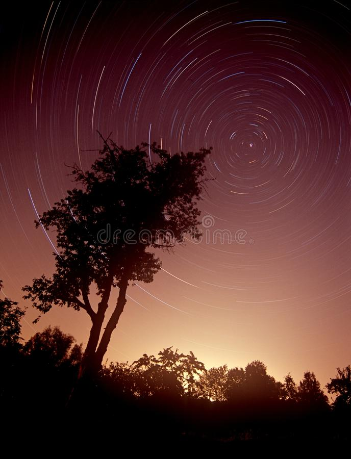 Boom en de Hemel van de Nacht. stock afbeelding