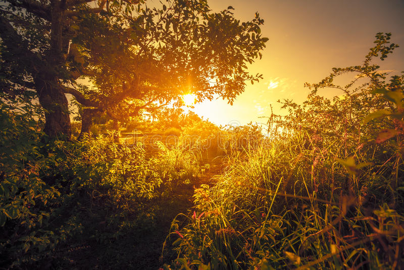 Boom en gras bij zonsopgang royalty-vrije stock afbeelding