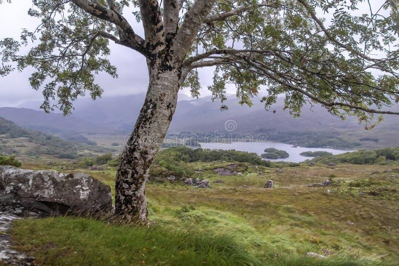 Boom en landschap bij Damesmening stock afbeelding