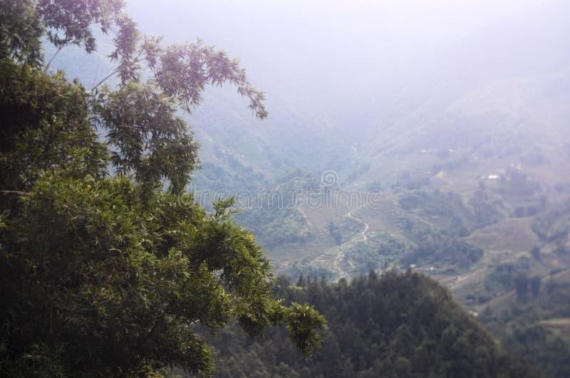 Boom en onscherpe achtergrond van de bergenvallei stock foto's