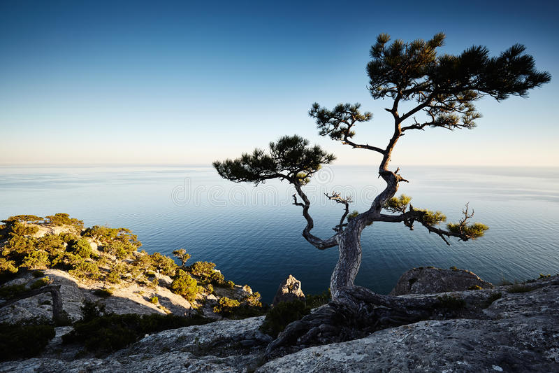 Boom en overzees bij zonsondergang Het landschap van de Krim stock foto's