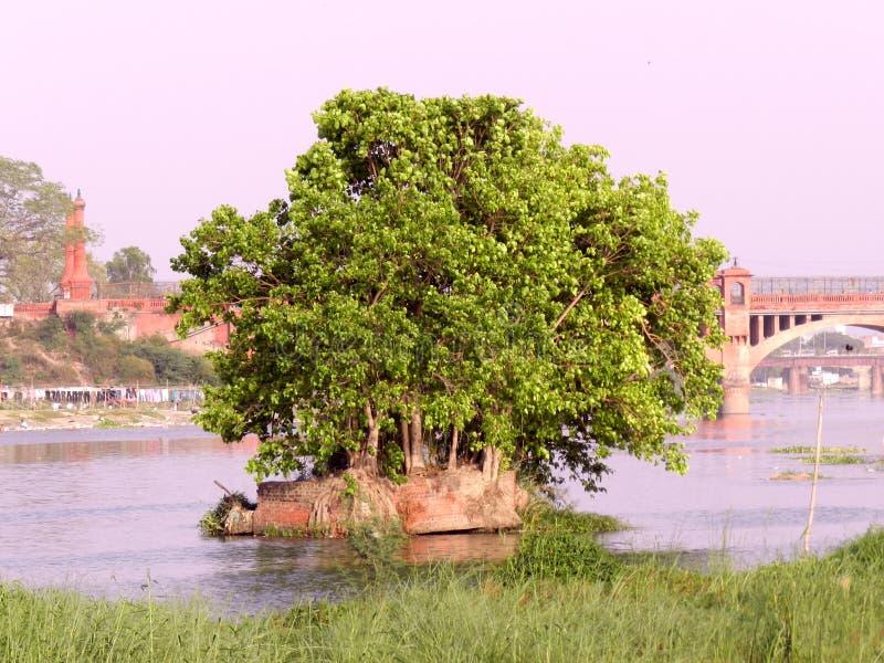 Boom en rivier stock foto