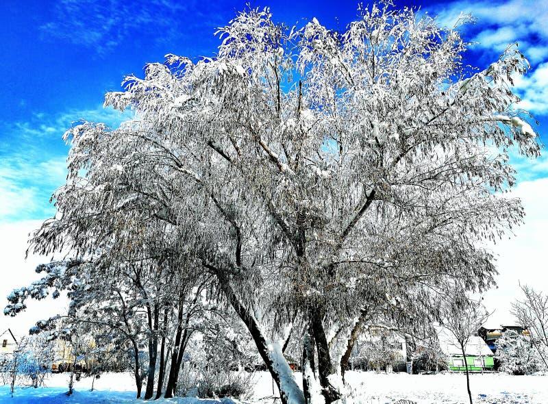 Boom en sneeuw royalty-vrije stock afbeeldingen
