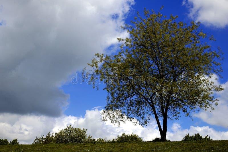 Boom en wolken royalty-vrije stock afbeelding