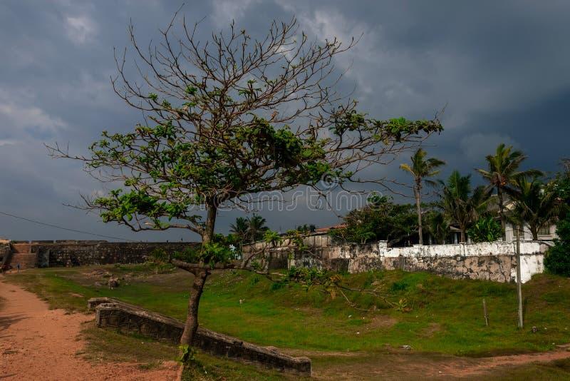 Boom in fort in Gagel, Sri Lanka Oude stad en dramatische hemel stock fotografie