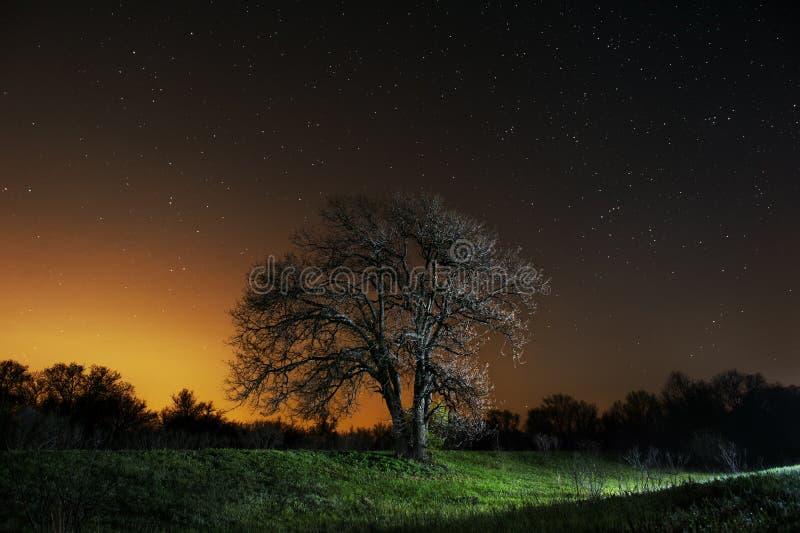 Boom in gebied en sterren hierboven royalty-vrije stock foto's