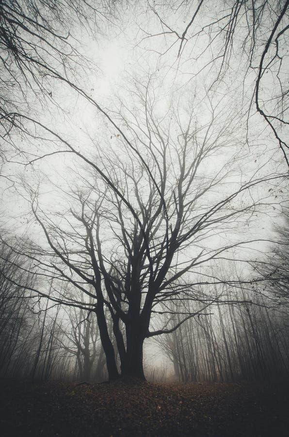 Boom in geheimzinnig Halloween-bos met mist stock foto's