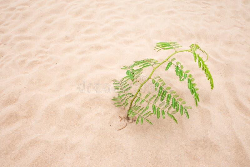 Boom groen blad op zandstrand royalty-vrije stock afbeeldingen