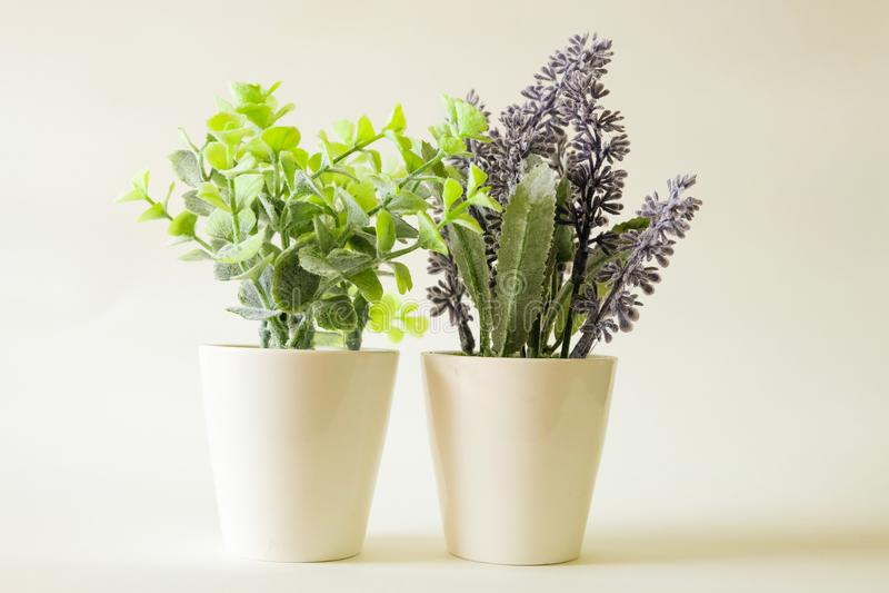 Boom in groen en lavendel in pot op zachte toonachtergrond royalty-vrije stock fotografie