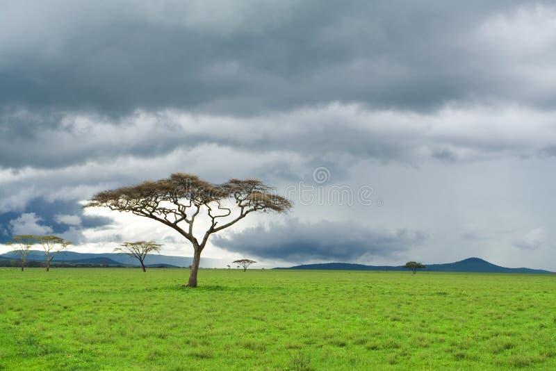 Boom, groene weide, en onweerswolk in savanne royalty-vrije stock foto
