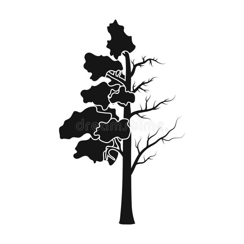Boom half volledig van groen blad en half droog pictogram in zwarte die stijl op witte achtergrond wordt geïsoleerd De voorraad v royalty-vrije illustratie