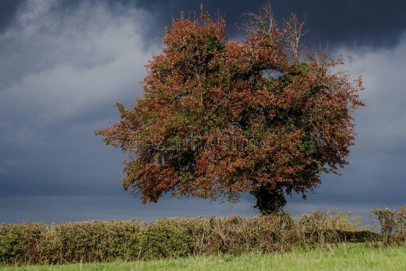 Boom in herfstkleuren royalty-vrije stock afbeeldingen