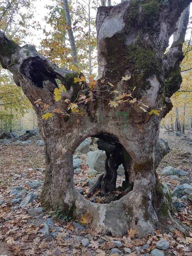 Boom in het bos stock afbeelding