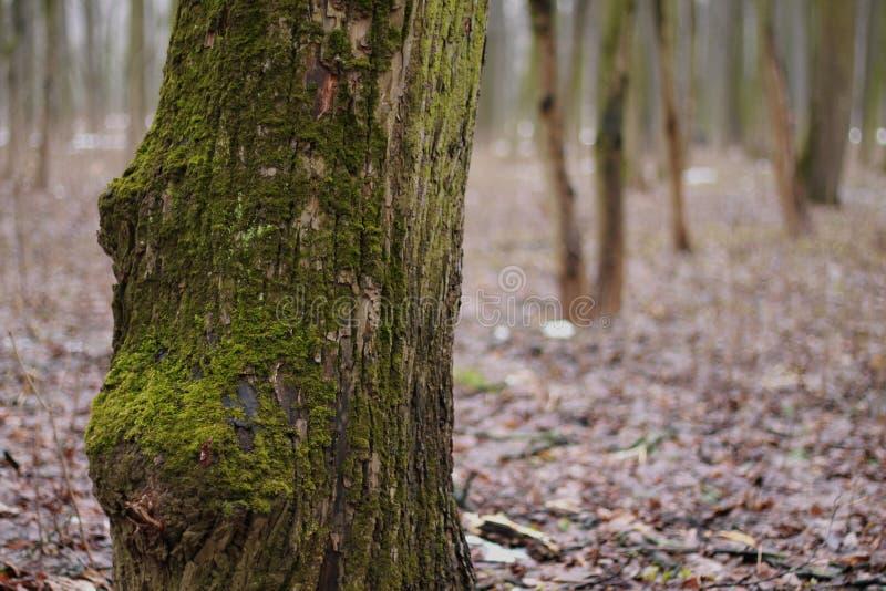 Boom in het bos royalty-vrije stock afbeelding