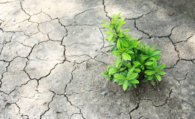 Boom het groeien op gebarsten aarde/het groeien boom/sparen de wereld/ stock afbeeldingen
