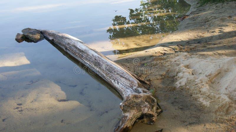 Boom in het meer stock fotografie