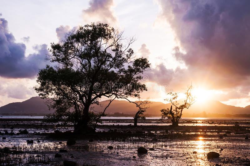 Boom in het overzees met kleur van zonsondergang en onweerswolk stock foto's