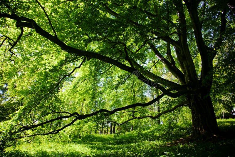 Boom in het park stock fotografie