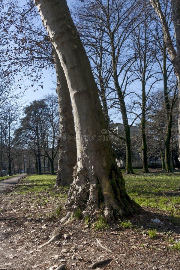 Download Boom in het park stock afbeelding. Afbeelding bestaande uit landschap - 39108149