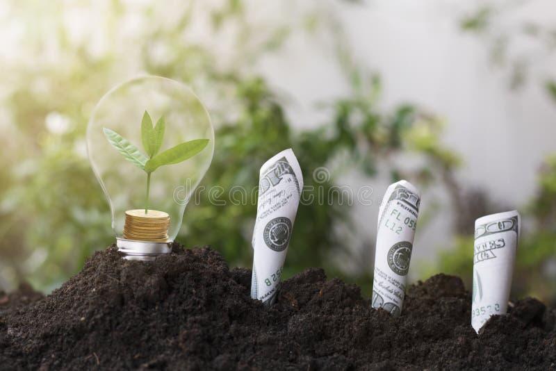 Boom het planten en de groei omhoog op geldmuntstuk, op gloeilamp met grond en dollars, bankbiljet wordt gestapeld dat het concep stock afbeelding