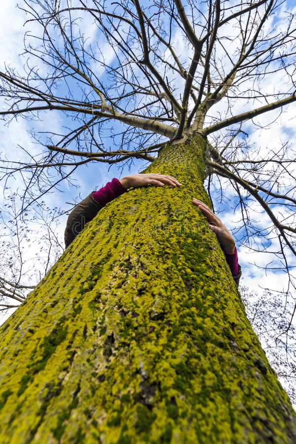 Boom hugger milieudeskundige stock foto's