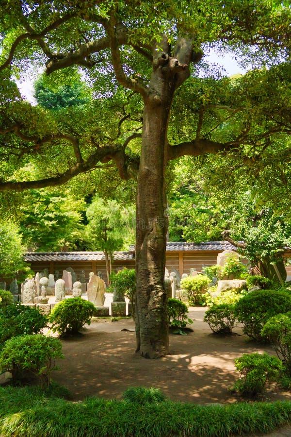Boom in Japanse Begraafplaats stock afbeeldingen