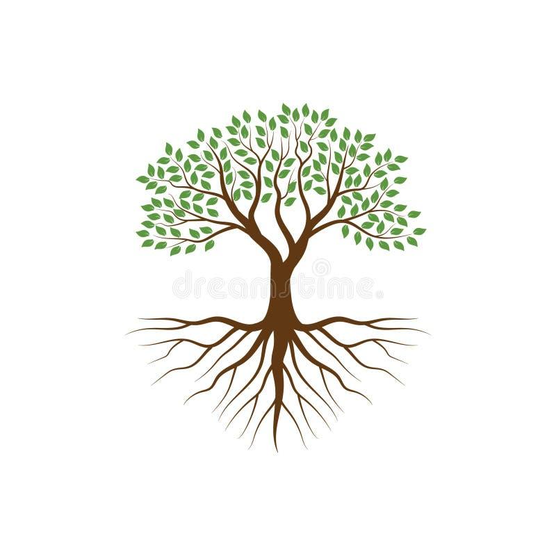 Boom met de wortels vectorillustraties vector illustratie