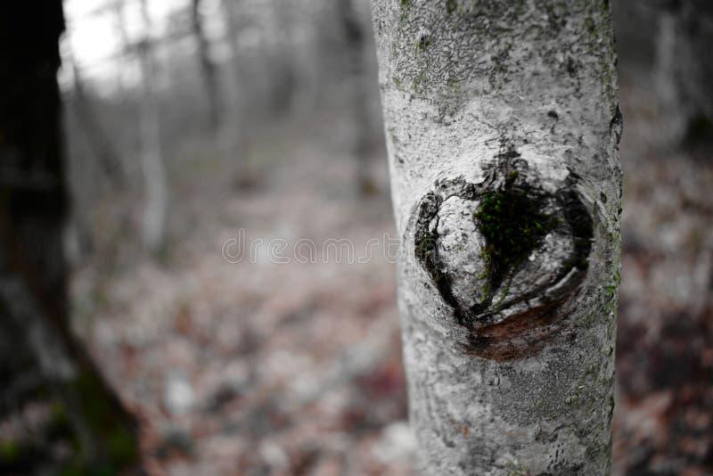 Boom met een aar in de vorm van een hart stock afbeeldingen