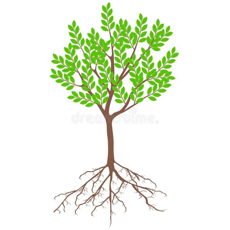 Boom met groene bladeren en wortels op een witte achtergrond royalty-vrije illustratie