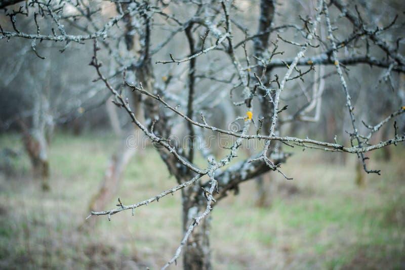 Boom met knoppen in het mos in het de lentepark royalty-vrije stock afbeelding
