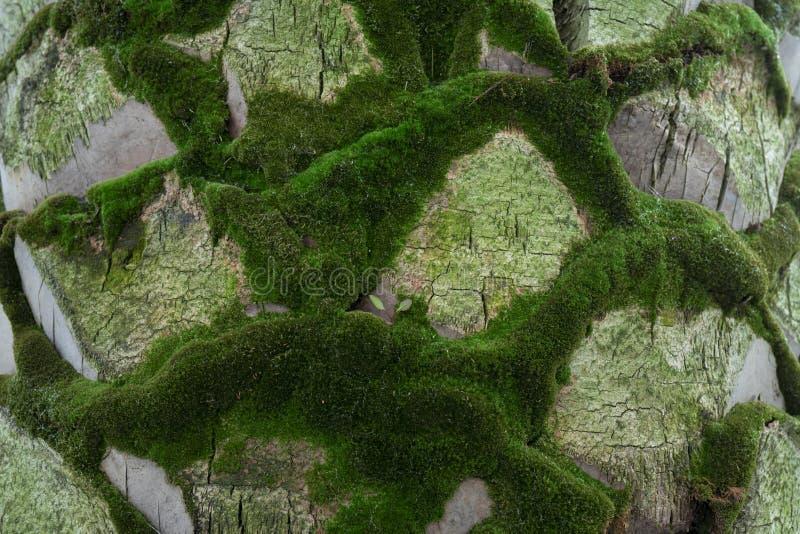 boom met mos op wortels in een groen bos of mos op boomboomstam royalty-vrije stock fotografie