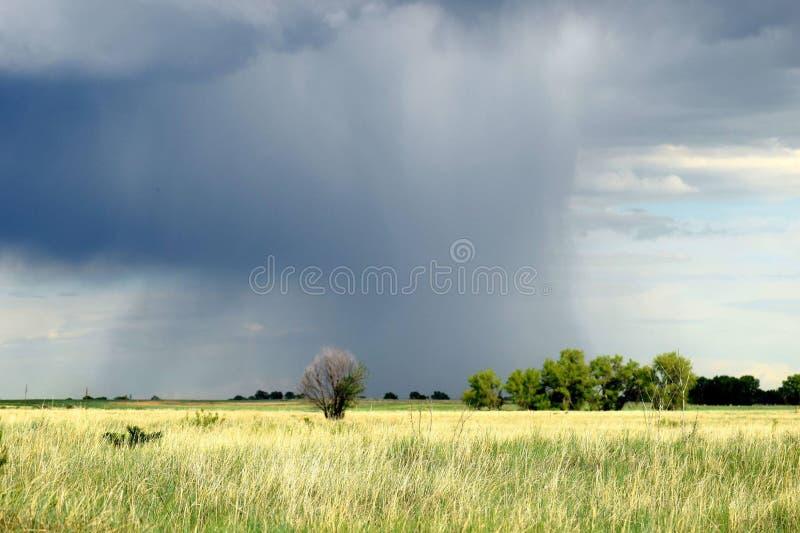 Boom met onweer achter het stock afbeeldingen