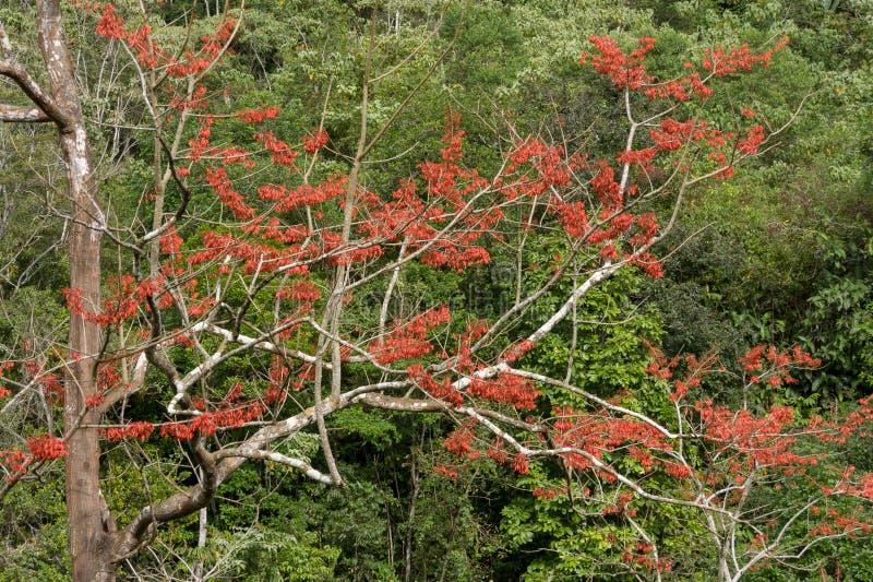 Boom met rode die bloemen door vegetatie worden omringd stock afbeeldingen