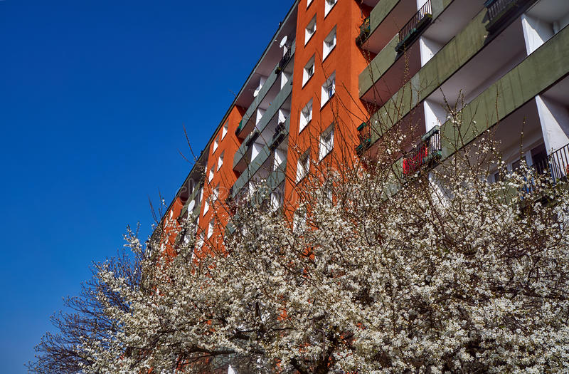Boom met witte bloemen in de lente tegen de voorgevel van een moderne woningbouw royalty-vrije stock afbeelding