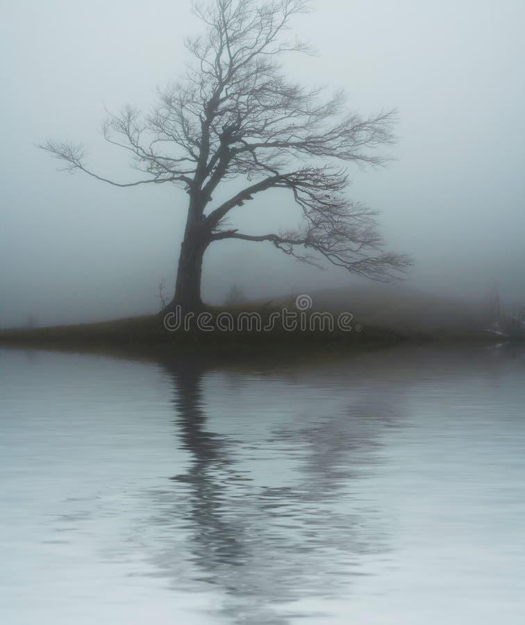 Boom in mist stock foto's