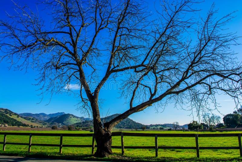 Boom, omheining, wijngaarden, groene gebieden, en blauwe hemel stock afbeeldingen