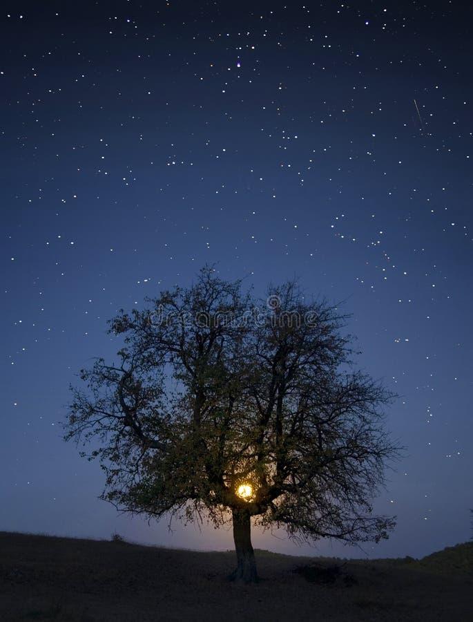 Boom onder hemel met sterren en maan royalty-vrije stock fotografie