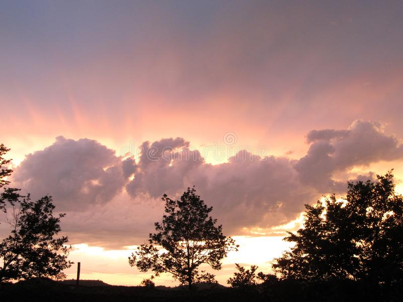 Boom onder sombere hemelzonsondergang stock foto's