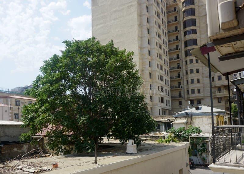 Boom op Dak in Baku royalty-vrije stock afbeelding