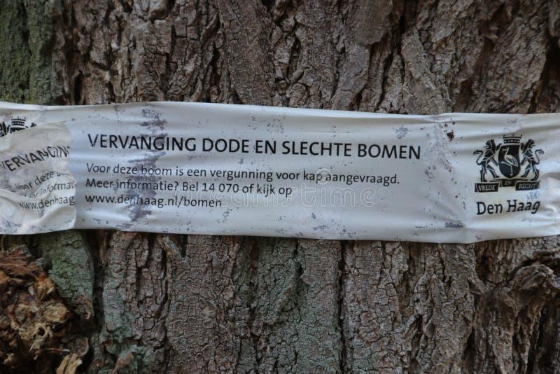 Boom op de straat van Den Haag dat informatieband heeft dat dit slecht van dode boom zal worden verminderd royalty-vrije stock foto's