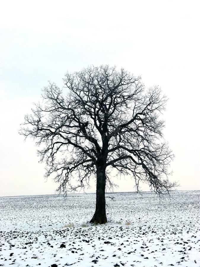Boom op een de wintergebied 1 stock afbeeldingen