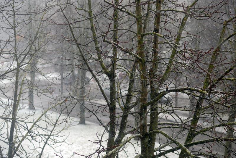 Boom op een gebied in de winter met de dalende achtergrond van het de Winternieuwjaar van sneeuwkerstmis stock foto