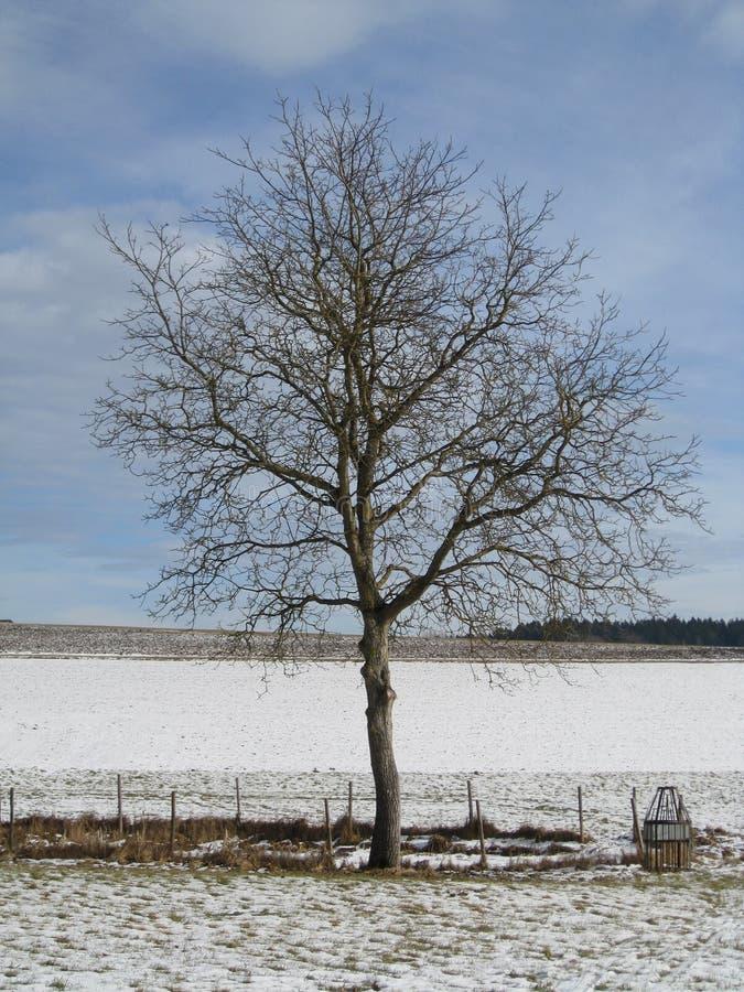 Boom op gebied in de winter stock afbeeldingen