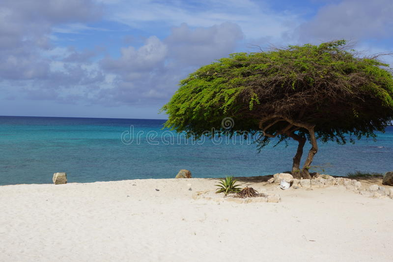 Boom op het strand stock afbeeldingen