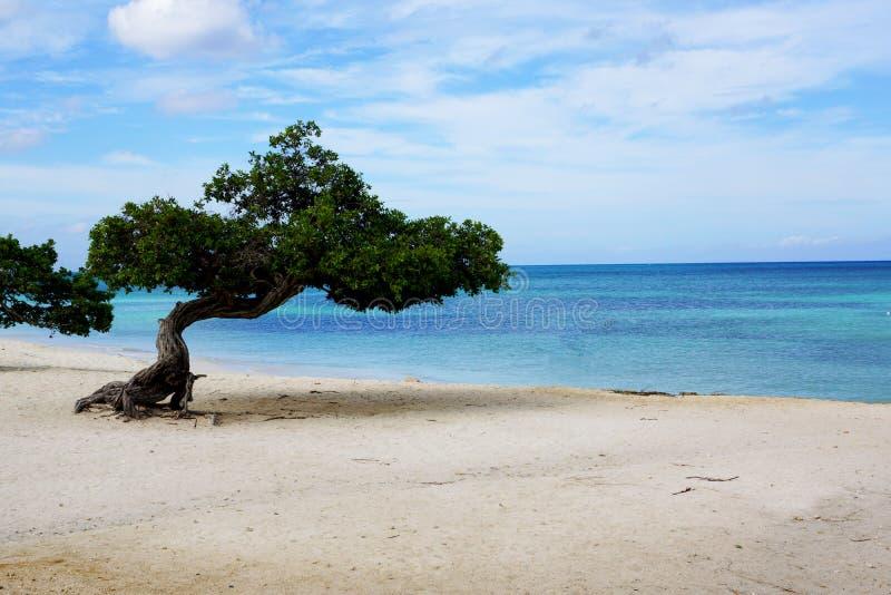 Boom op het strand royalty-vrije stock fotografie
