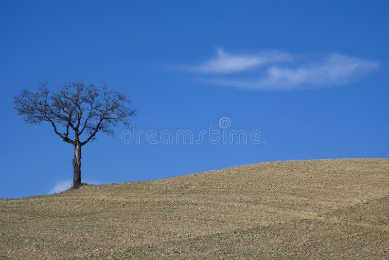 Boom op landbouwgrond stock foto