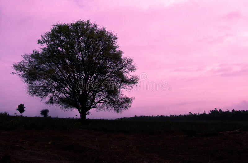 Boom op roze hemel royalty-vrije stock afbeelding