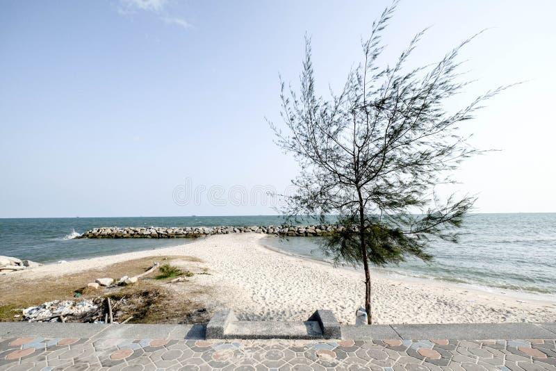 Boom op strand royalty-vrije stock afbeeldingen